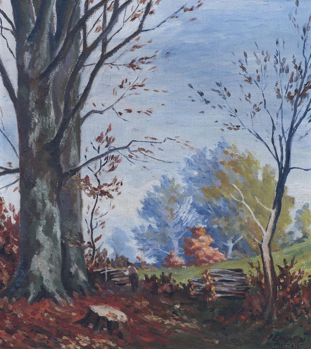 Herbstlicher Waldweg, Buchenweg, Bentheimer Wald